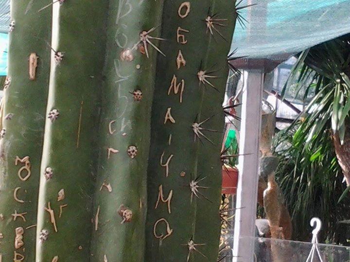 Вандалы расписали кактус в Никитском ботаническом саду