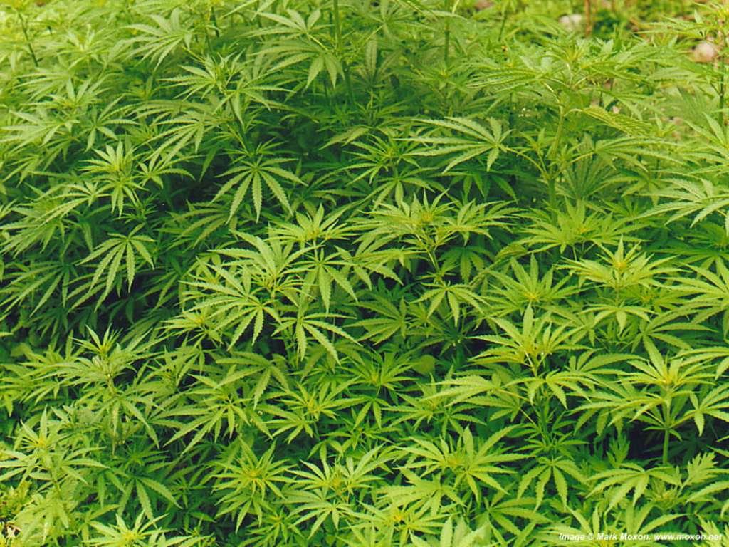 Преступник спрятал в ялтинских горах два килограмма наркотиков