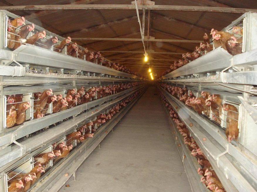Севастопольские власти не поддерживают строительство птицефабрики
