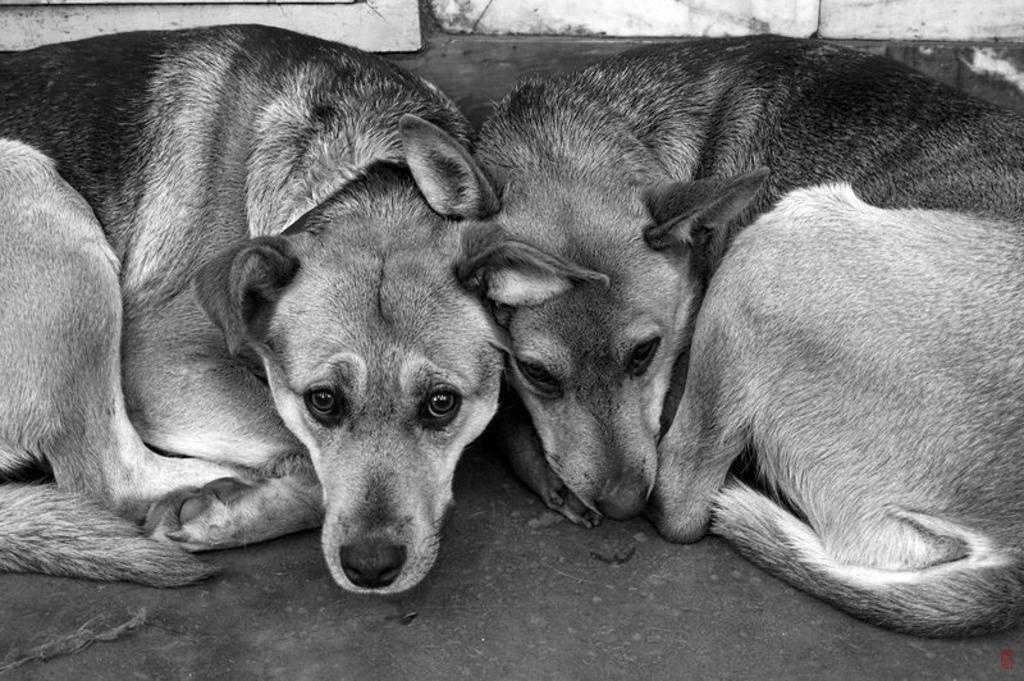 В Евпатории живодеры вместе с дикими собаками уничтожали и домашних