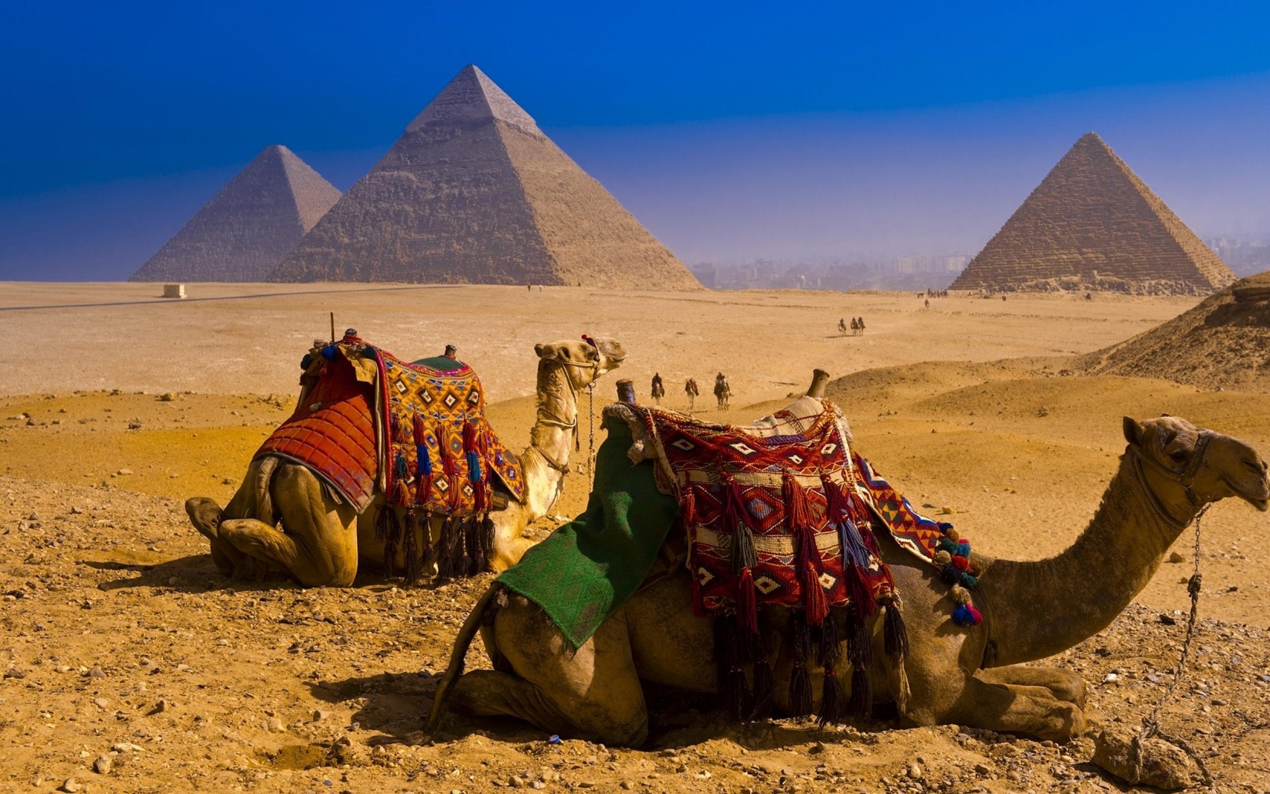 В России начнут продавать египетские продукты