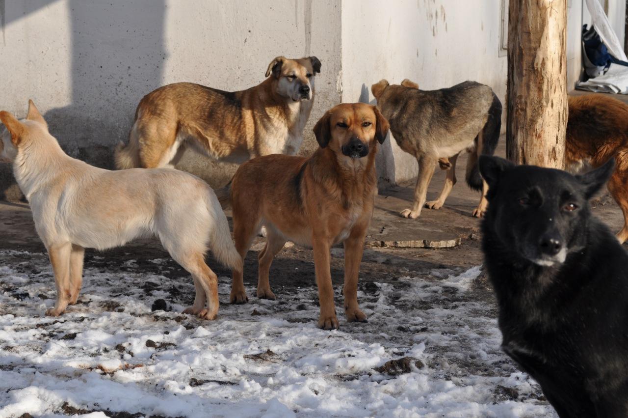 Евпаторийские власти намерены избавиться от бездомных собак к началу курортного сезона