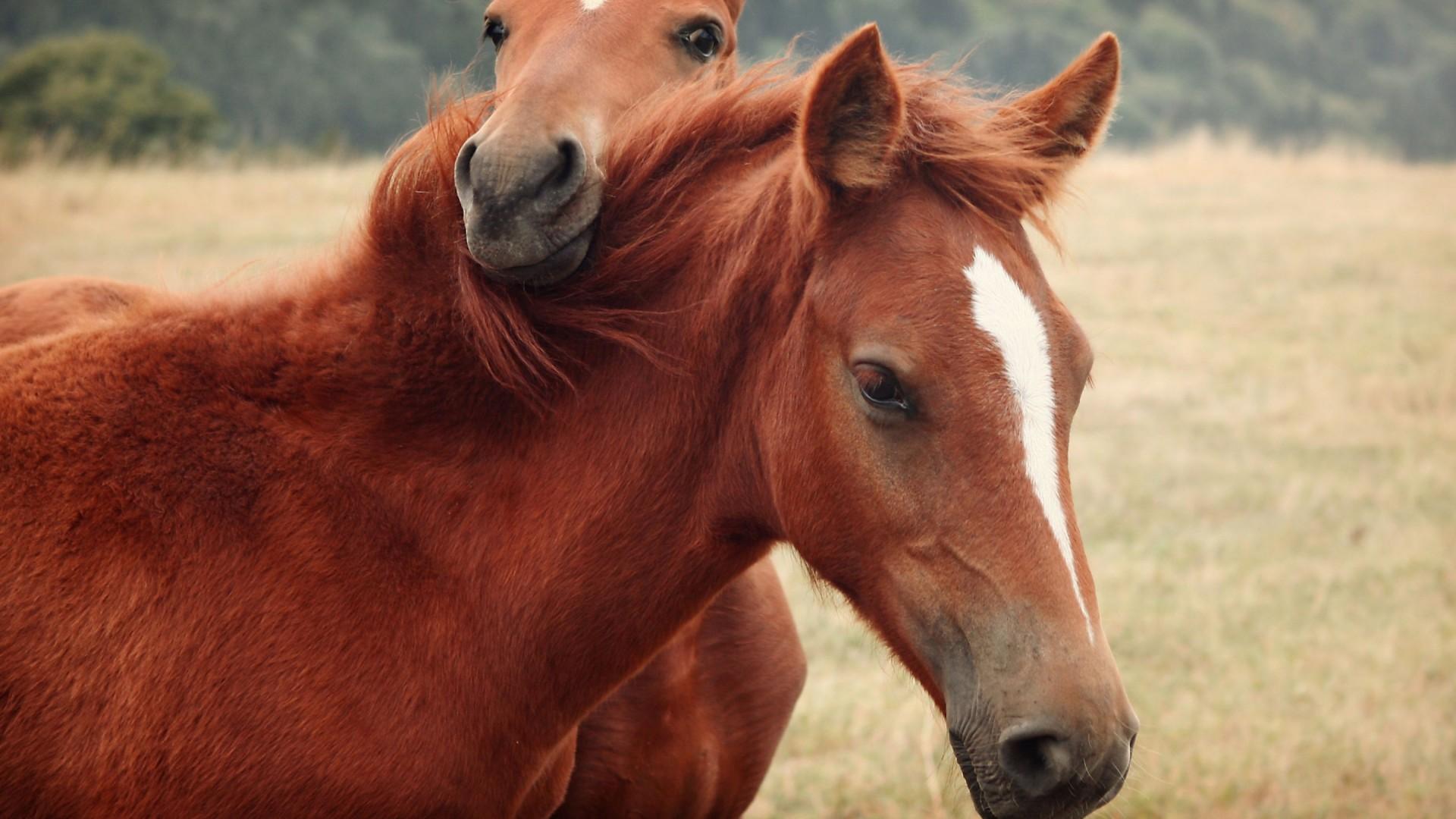 В Крыму несовершеннолетняя воровала лошадей
