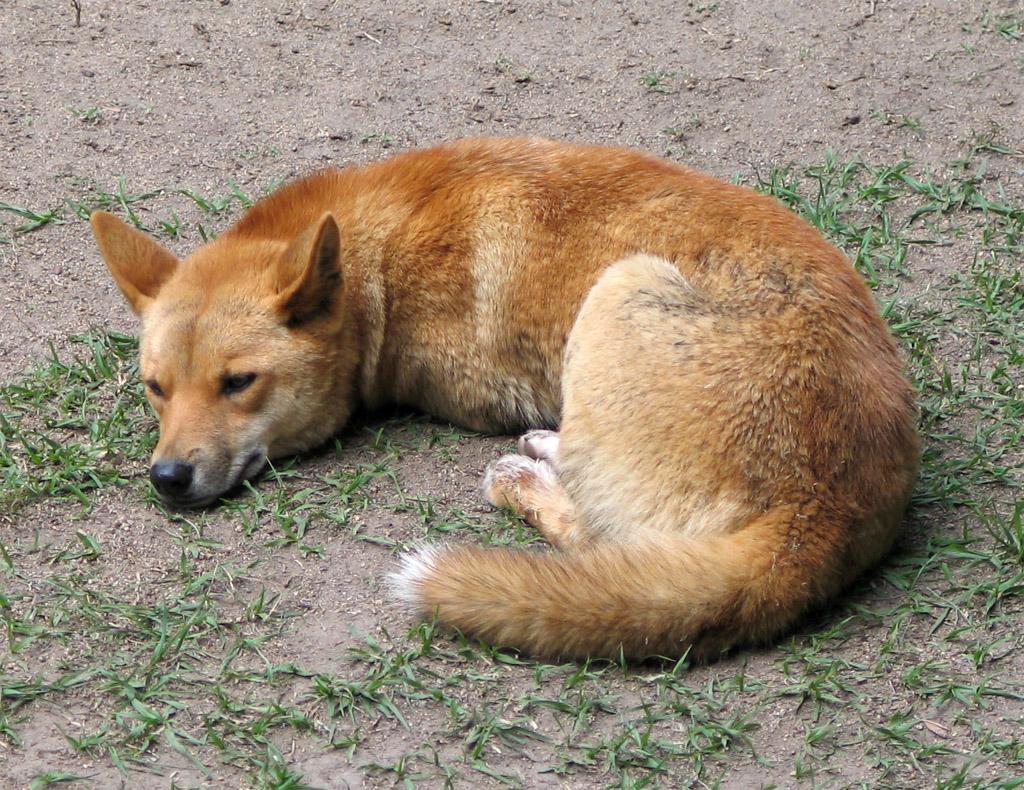 В Ялте продолжают ловить диких собак