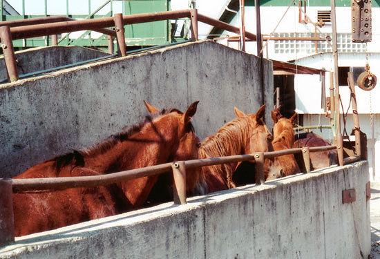 Один из крымских заводов выдает конину за говядину