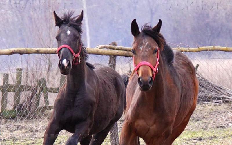 В Феодосии местный житель украл лошадей и сдал их на забой