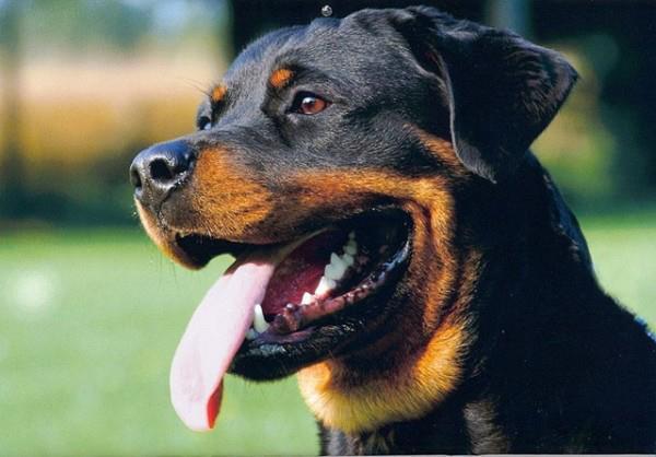 В Джанкое две сбежавшие собаки нападали на прохожих