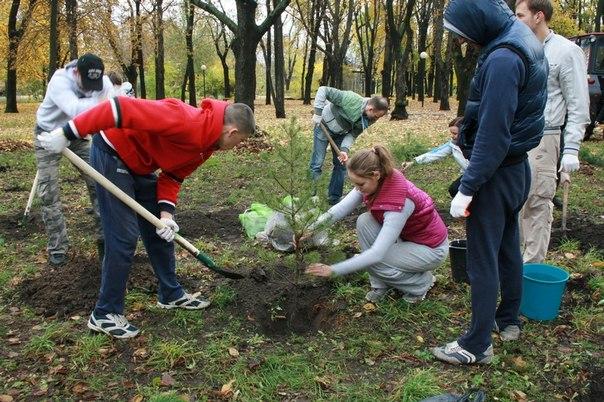 В Крыму на местах незаконной рубки леса будут сажать новые деревья