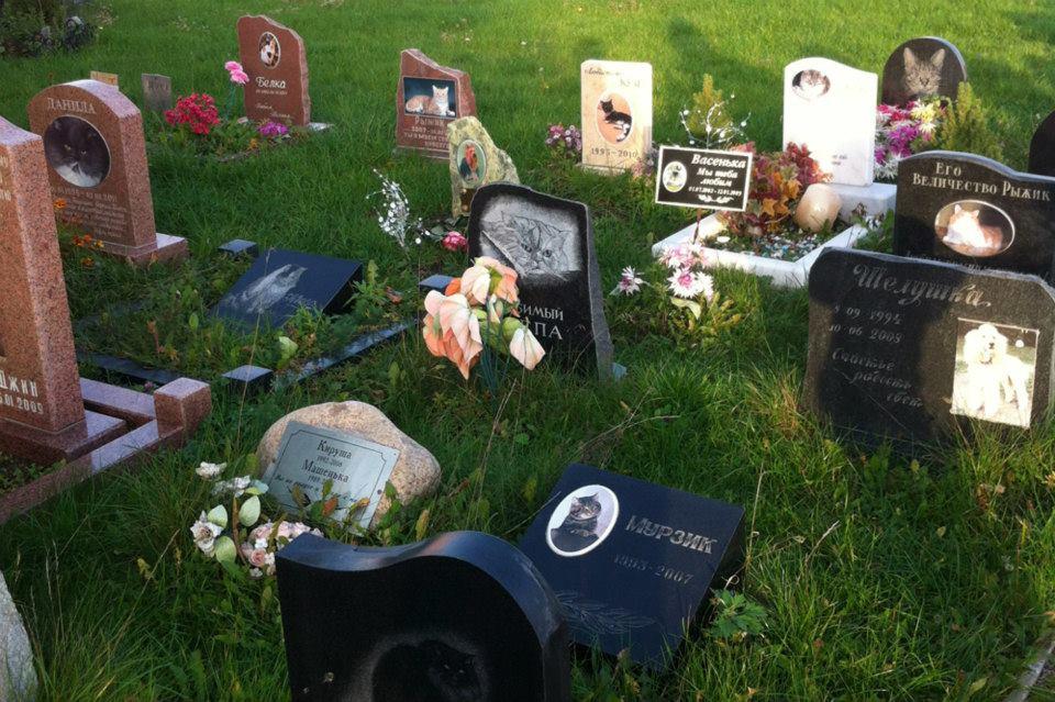 Похоронить домашних животных в Симферополе можно будет на специальном кладбище