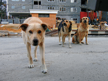 В Крыму наконец-то намерены закрепить борьбу с бездомными собаками на законодательном уровне