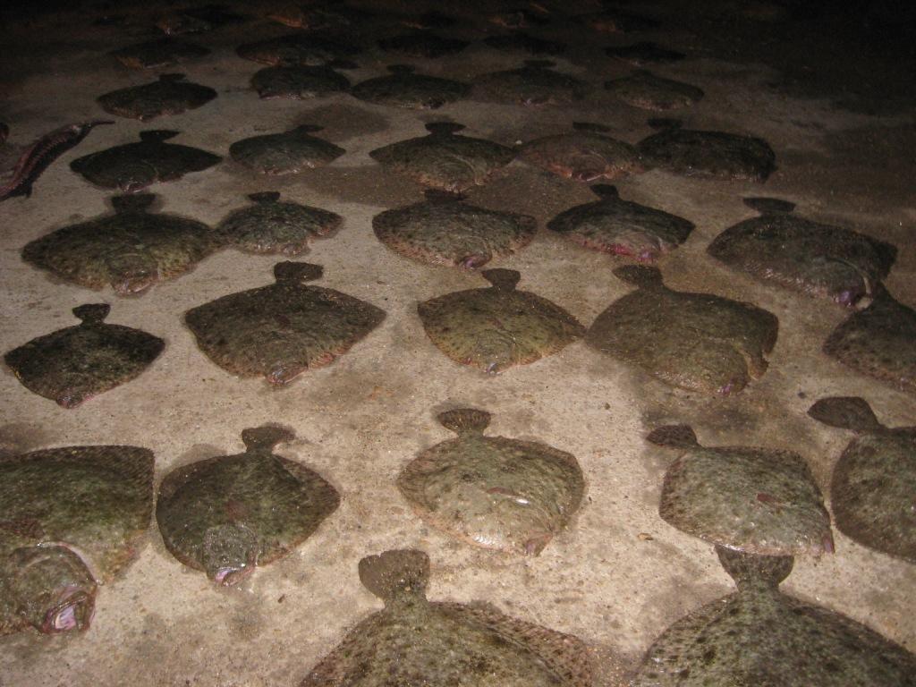 Бюрократов обвинили в том, что весенний вылов рыбы прошел неэффективно