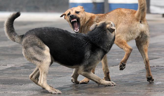 Под Симферополем безопасности жителей угрожают бездомные собаки