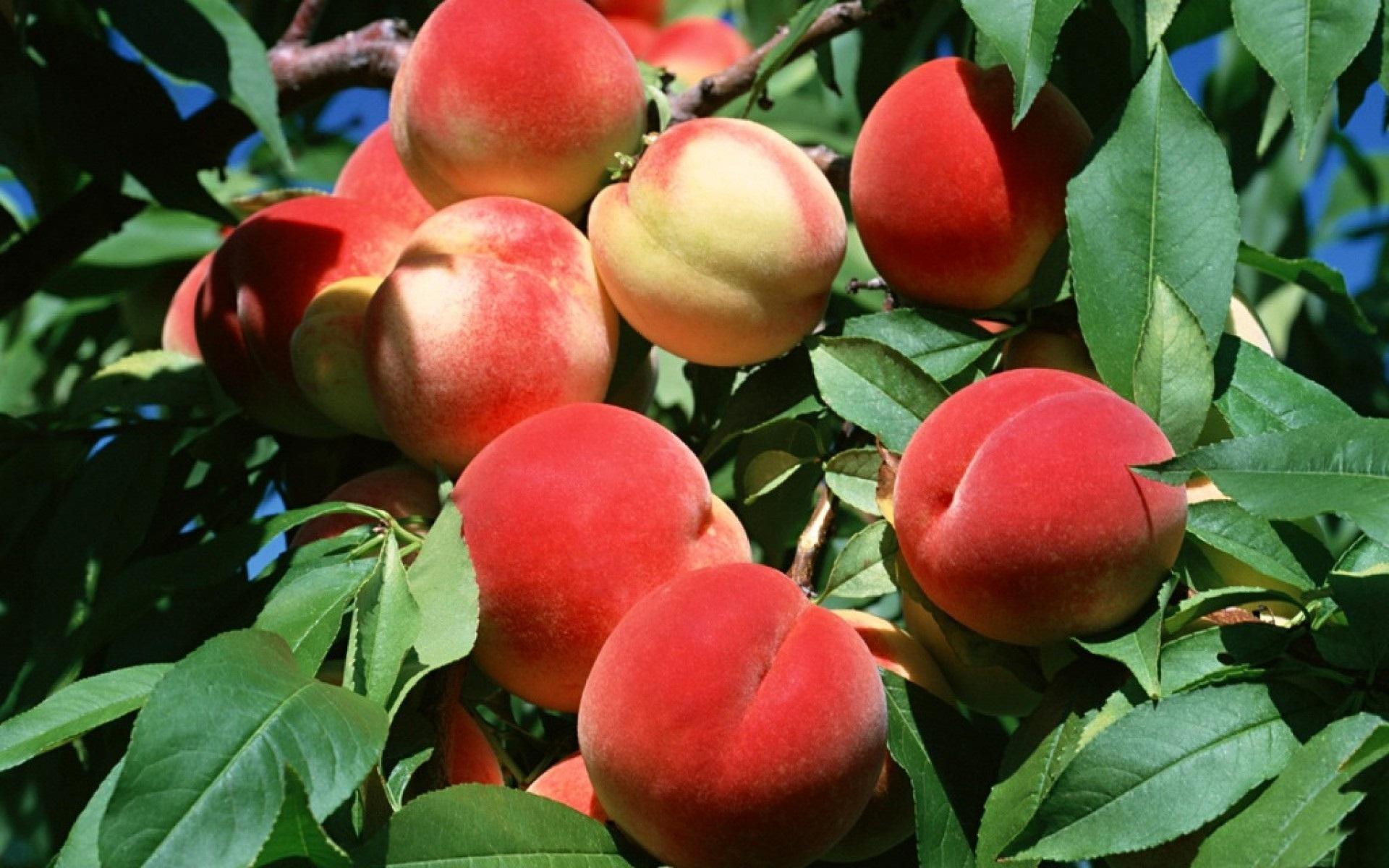 Местному жителю грозит пять лет за кражу персиков