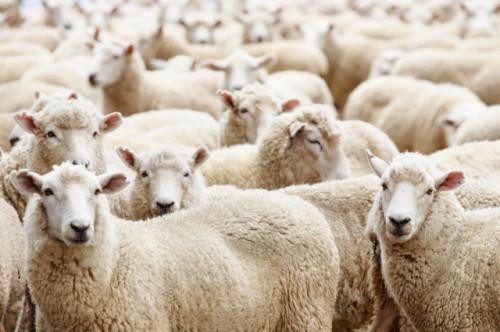 Крымские сельскохозяйственные отрасли переживают упадок