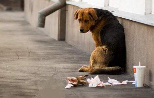 В Евпатории бездомных животных будут стерилизовать за счет средств из городского бюджета