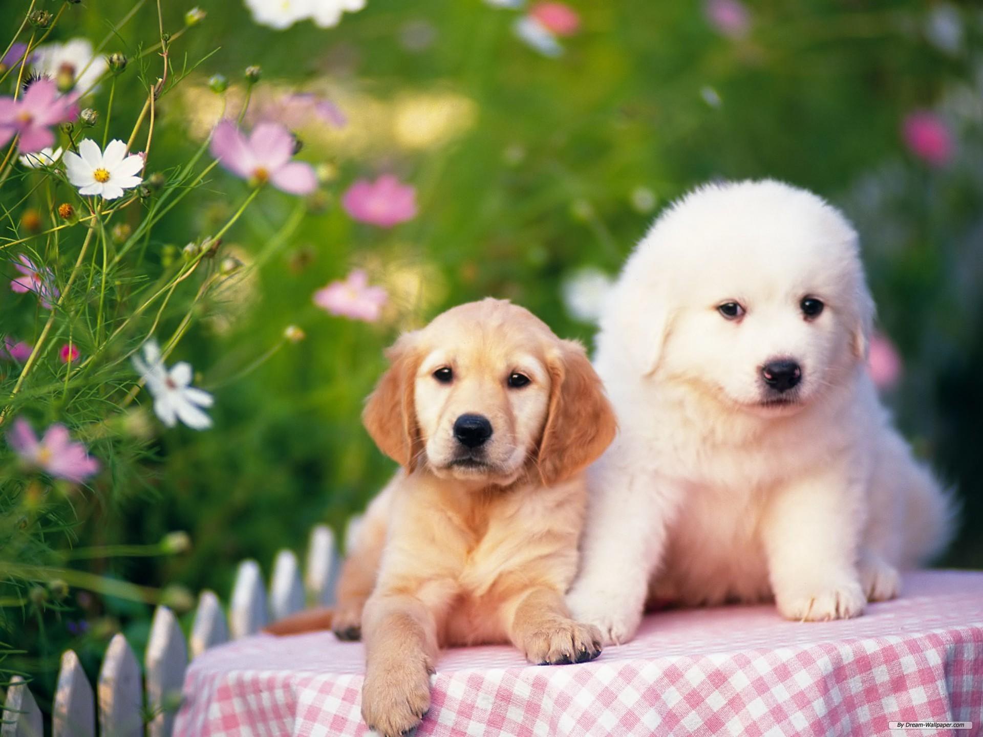 Крымчане со следующего года начнут регистрировать домашних животных.