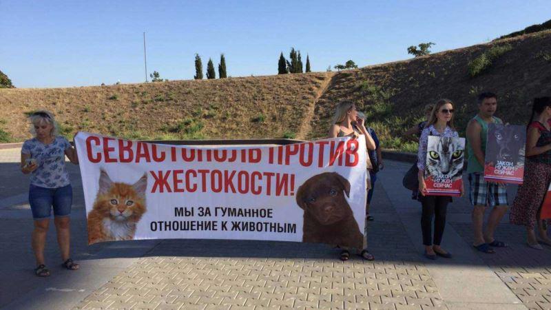 В Севастополе требовали ужесточения наказания за жестокое обращение с животными