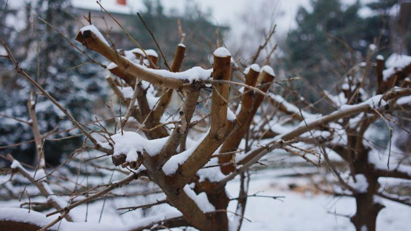В Симферополе готовятся к обрезке деревьев в сквере Мира