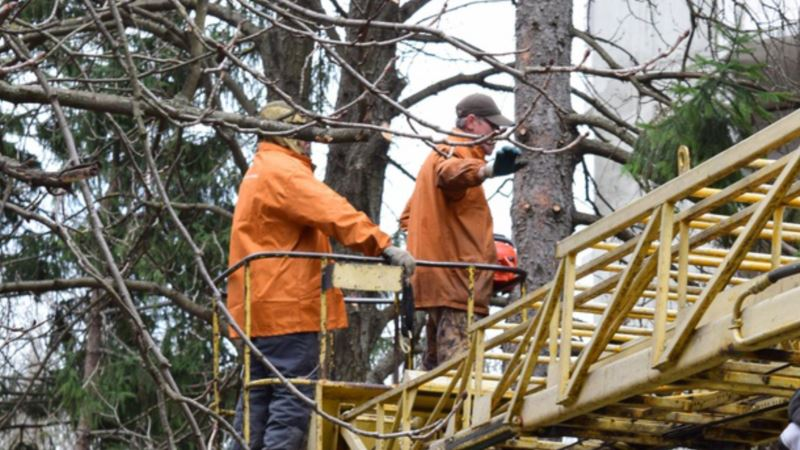 В Кировском районе обрезали деревья вдоль дорог по самый ствол – российский общественник