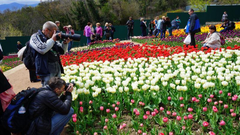 В Никитском ботсаду представили три новых сорта тюльпанов (+фото)
