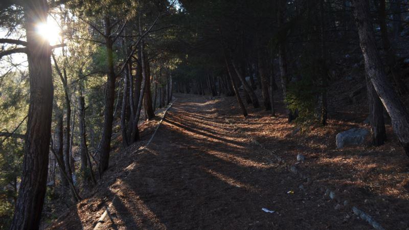 Российского министра просят проверить вырубку краснокнижных деревьев в Гаспре