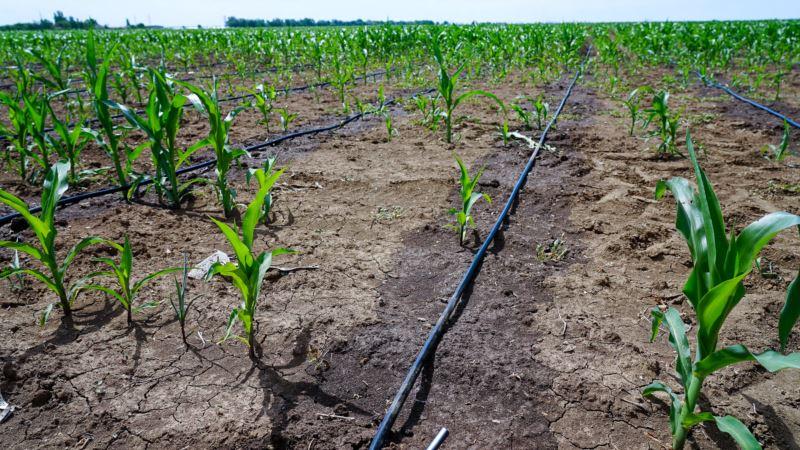 Водный баланс на полях Крыма восстановится в течение 5 лет – Минсельхоз России