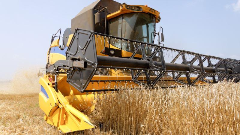 Крымские власти рассказали, сколько собрали зерна после засухи
