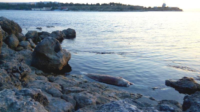За полгода крымчане 217 раз сообщали о мертвых дельфинах