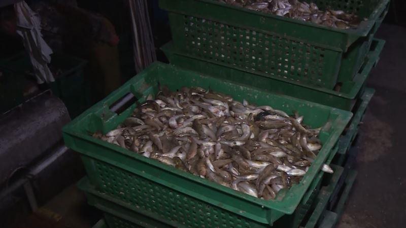 Крымским рыбакам объявили о начале сезона вылова бычков
