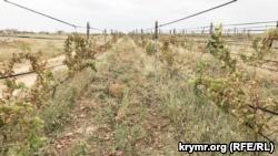 От выбросов в Армянске пострадали виноградники (+фото)