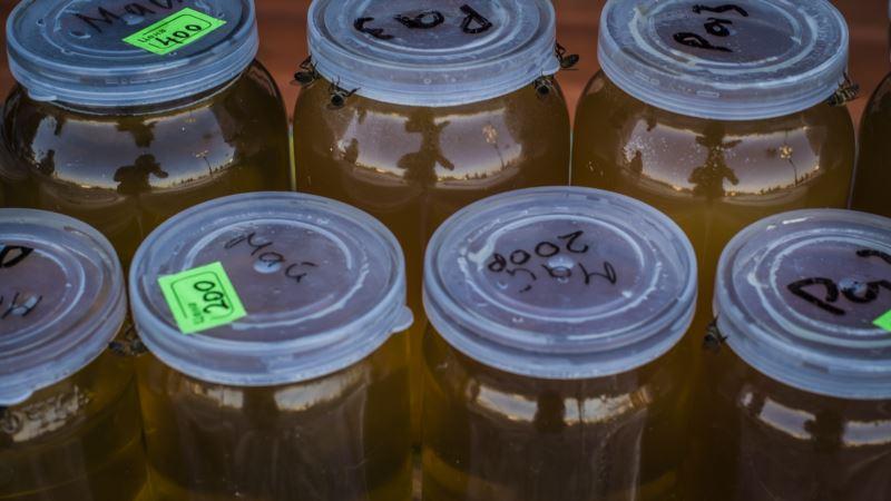 В Крыму в 2018 году рекордно низкий урожай меда – пчеловод