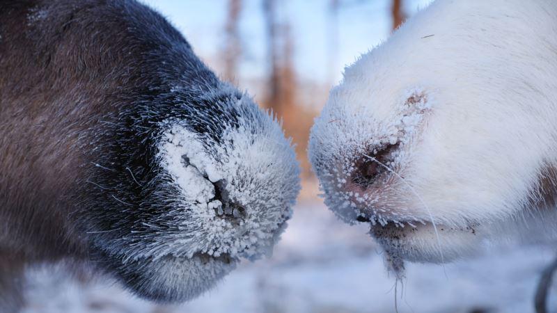 За последние 44 года на Земле уничтожили 60% животных – доклад