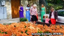 Цветочная «жар-птица». В Никитском ботсаду открылась выставка хризантем (+фото)