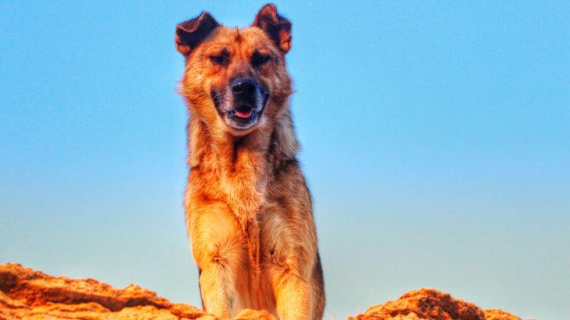 В Севастополе продолжается бесплатная вакцинация домашних животных