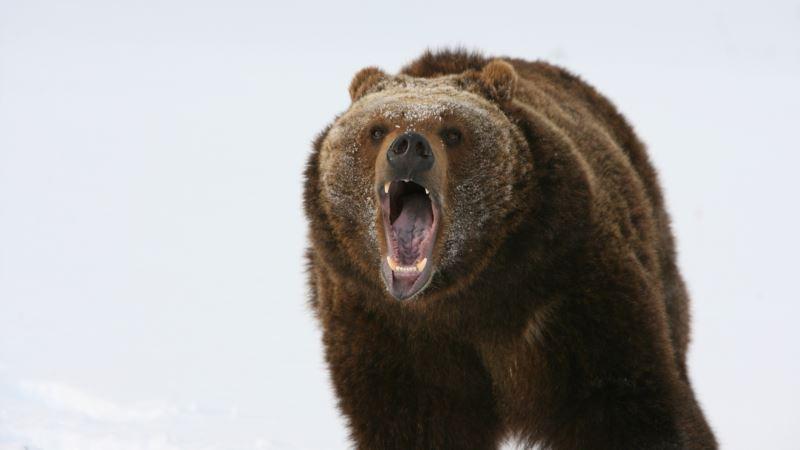 Россия: на Камчатке медведь убил подростка