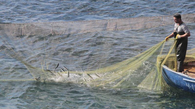 У черноморского побережья Крыма ввели запрет на вылов рыбы
