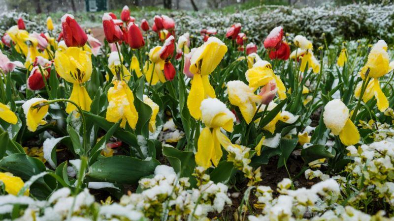 Погода в Крыму: синоптики прогнозируют дождь и мокрый снег.