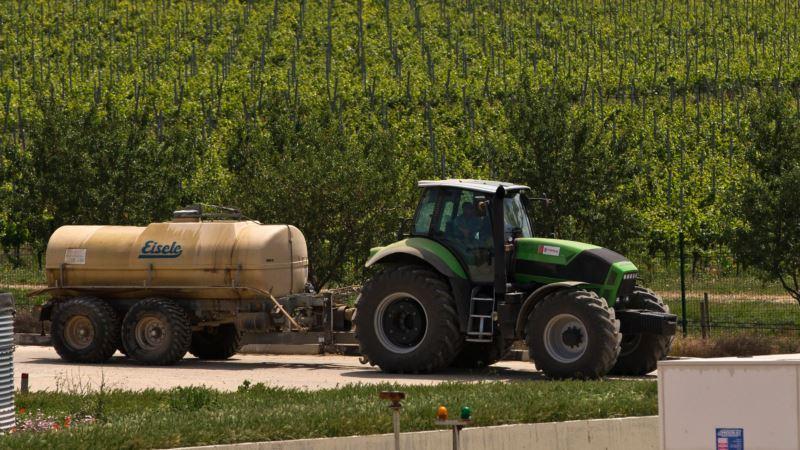 В «Массандре» утверждают, что собрали более 17 тысяч тонн урожая винограда