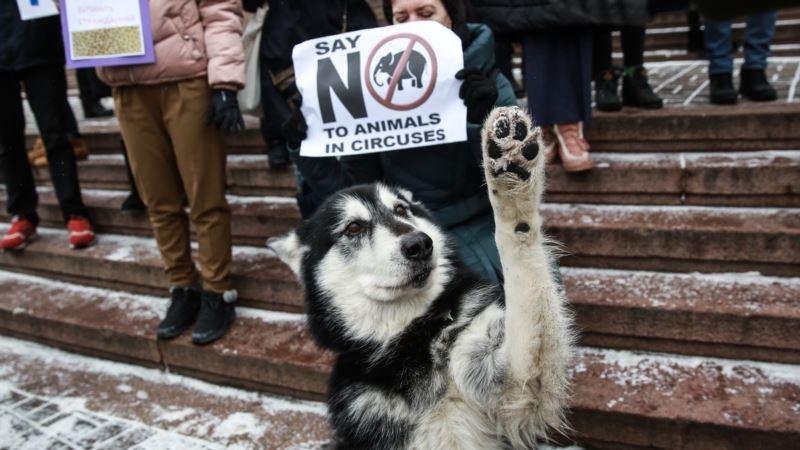 США: в Нью-Джерси запретили циркам выступать с дикими животными
