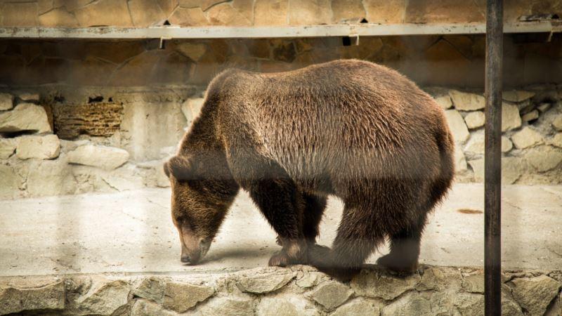В России губернатор застрелил медведя в берлоге, прокуратура завела дело
