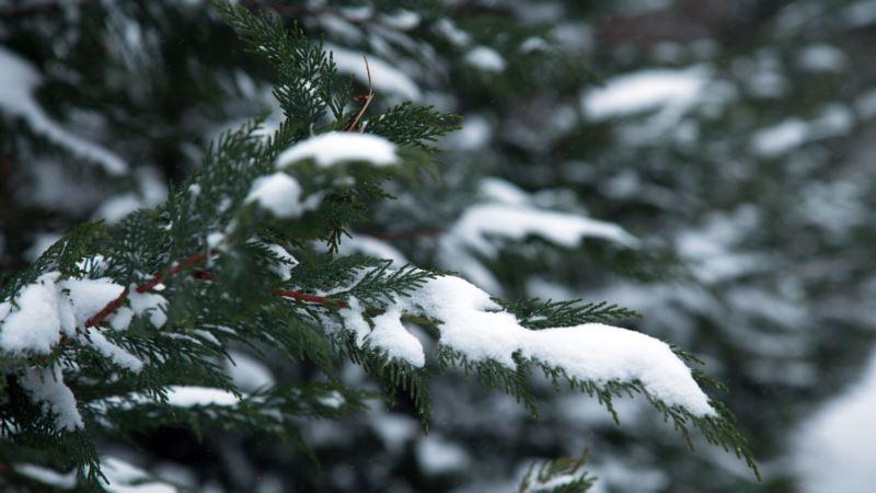 Синоптики предупреждают украинцев о снеге и дожде на выходных