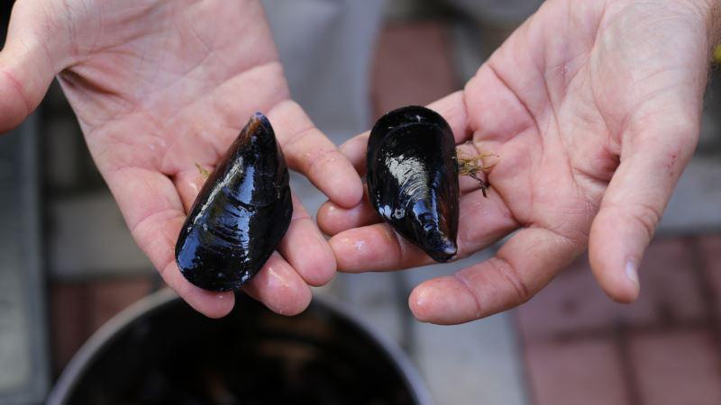 Прокуратура Севастополя требует демонтировать ферму по выращиванию моллюсков