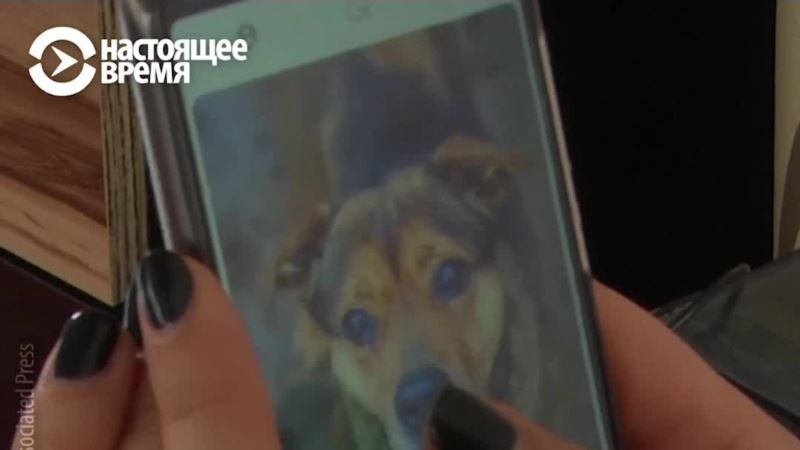 Tinder для собак: как животные в Литве находят новый дом (видео)
