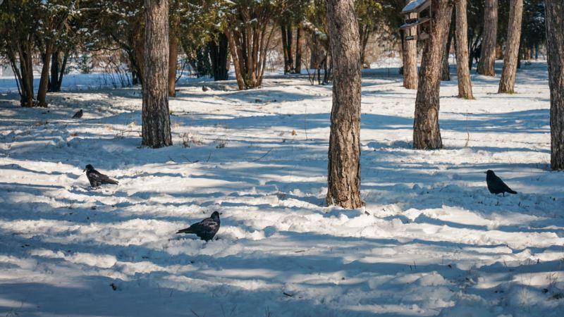 Погода в Крыму: синоптики прогнозируют снег на ЮБК