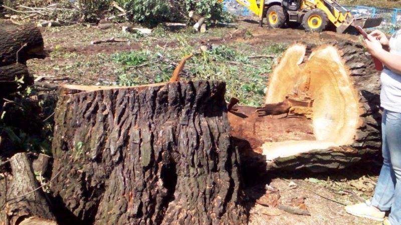 В Крыму возбудили более десяти дел за вырубку деревьев