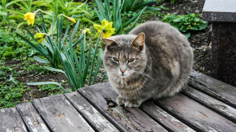 Несколько кварталов в Симферополе попали под карантин из-за бешенства котов