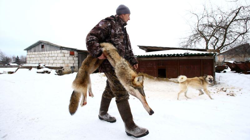 Житель Восточной Грузии убил голыми руками волка, напавшего на него