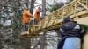 Власти Ялты подготовили документы для защиты крымской сосны и можжевельника