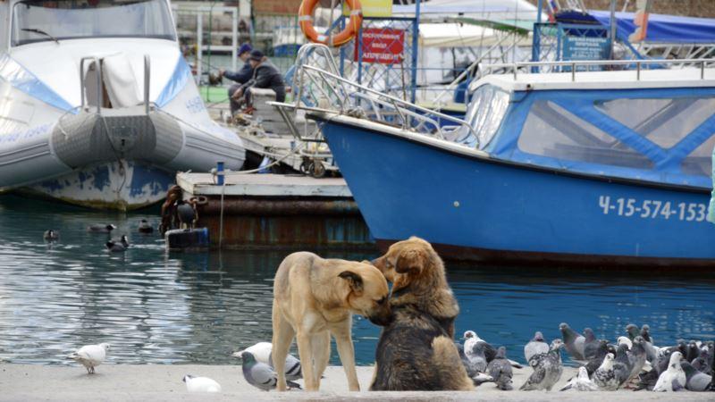 В Крыму зафиксировали 16 случаев бешенства животных – Госкомветеринарии