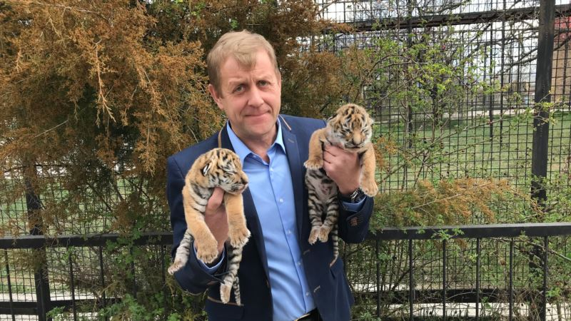 В крымском сафари-парке «Тайган» родились тигрята (+фото, видео)